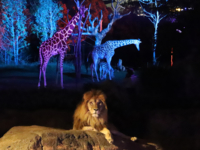 天王寺動物園「秋のナイトZOO」