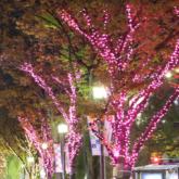 堺桜彩イルミネーション2019-堺東 大小路 堺駅-