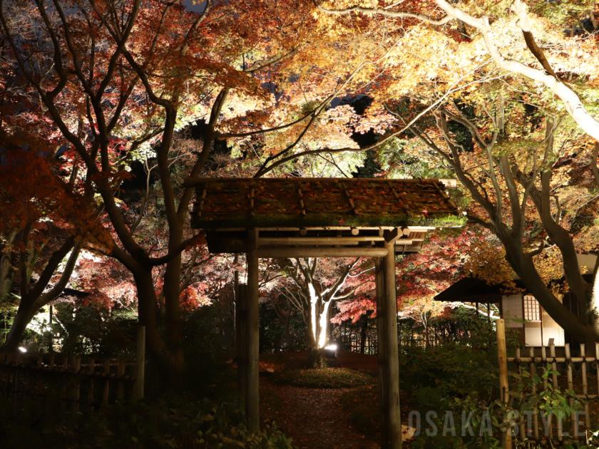 万博記念公園 紅葉まつり」日本庭園の夜間ライトアップ