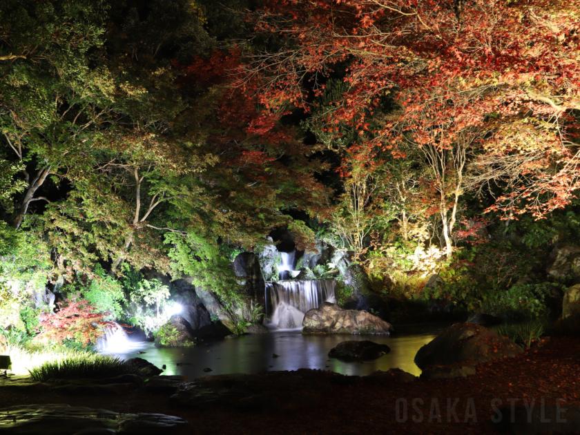 「万博記念公園 紅葉まつり」日本庭園の夜間ライトアップ