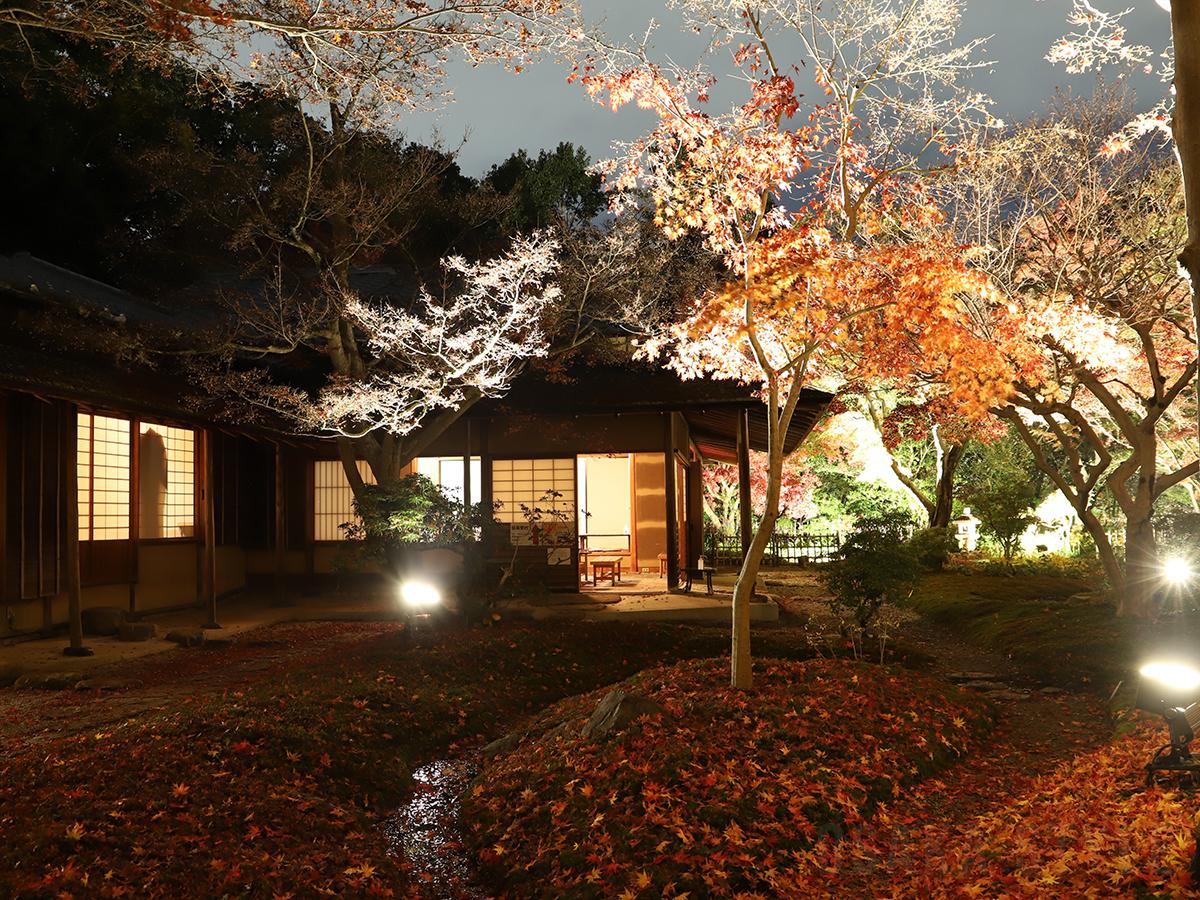 茶庭の紅葉ライトアップ