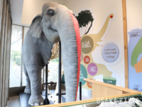 アジアゾウ「ユリ子」の全身骨格標本と半身のレプリカ