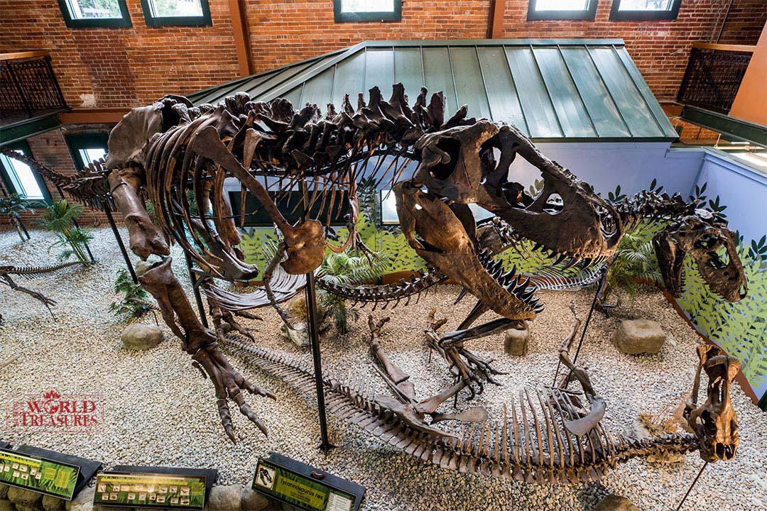 ティラノサウルス全身復元骨格 (愛称:アイヴァン アメリカでの展示風景