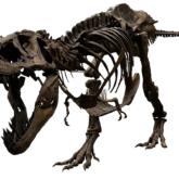 ティラノサウルス 全身復元骨格(愛称:スタン)