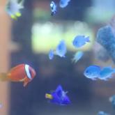 世界の淡水・海水魚展
